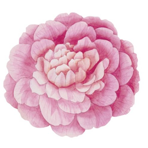 Camellia Placemats - Set of 4