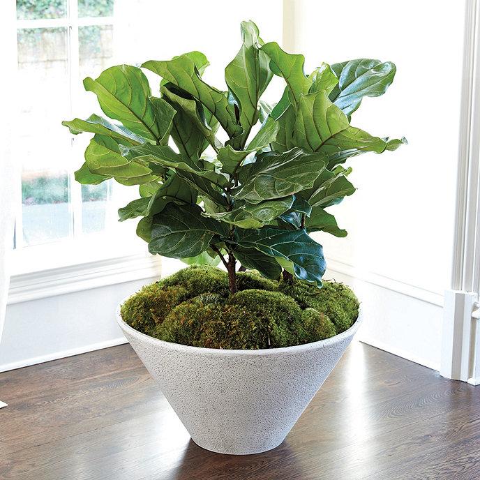 suzanne kasler olivier cone planter ballard designs. Black Bedroom Furniture Sets. Home Design Ideas