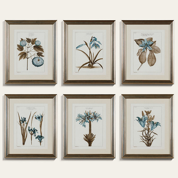 buchoz botanical art
