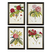 red rhododendron framed print