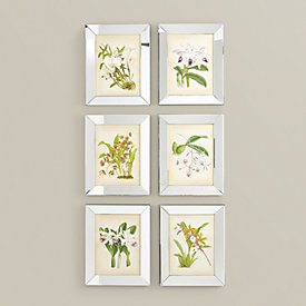 orchids in mirror frame art