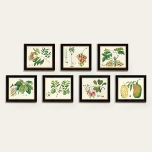 Bunny Williams Botanical Art