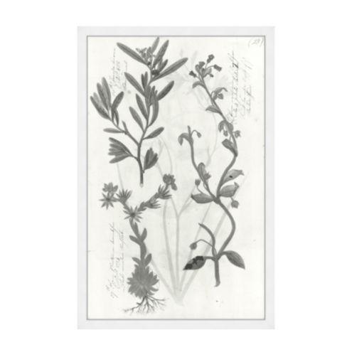 Piedmont Botanicals Art