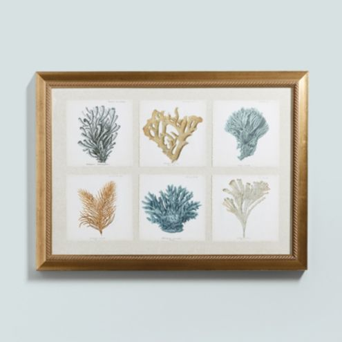 Coral Collection Art