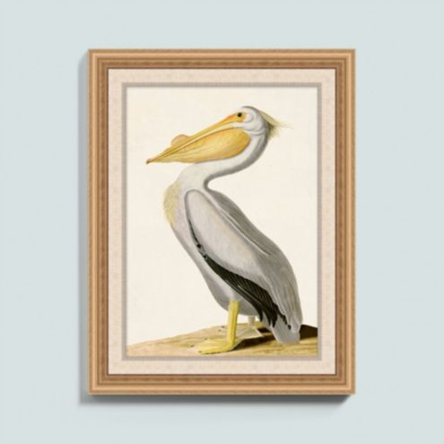 White Pelican Art
