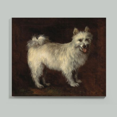 Antique White Dog Stretched Canvas
