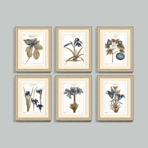 Buchoz Botanical Indigo Art