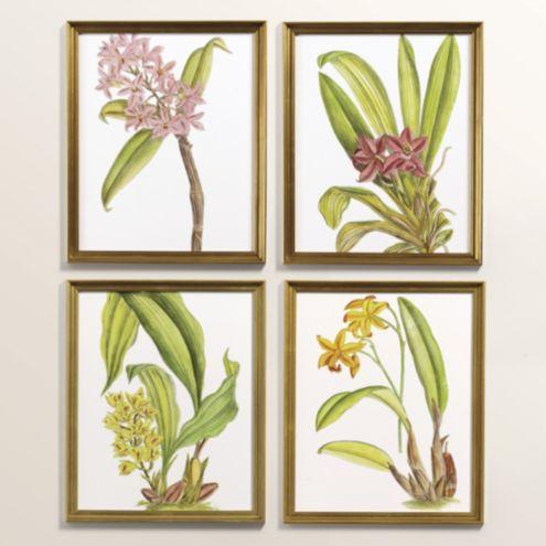 Petite Exotic Orchid Art