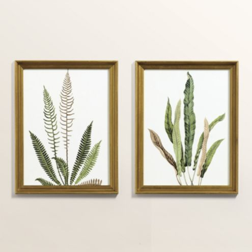 Petite Fern Study Art - Set of 2