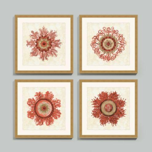 Coral Jellyfish Bloom Framed Print - Set of