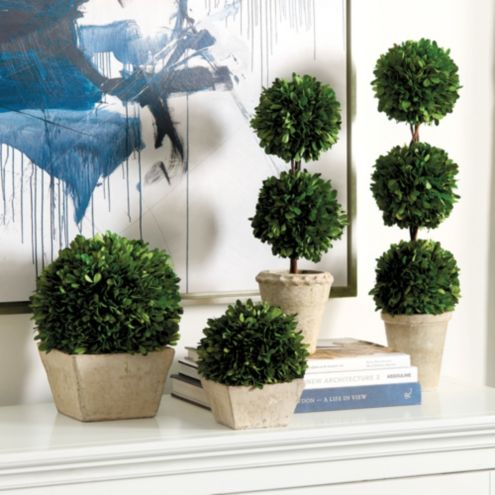 Preserved Boxwood Topiary Ballard Designs