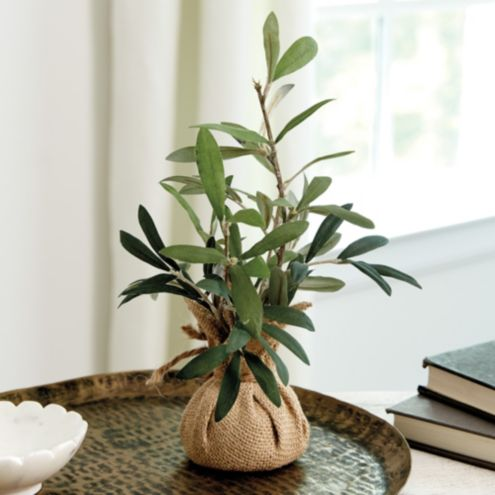 Petite Olive Topiary