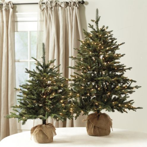 Suzanne Kasler Frasier Fir Tabletop Tree