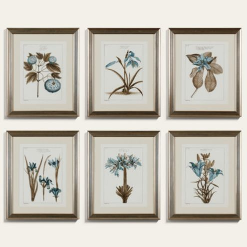 Buchoz Botanical Blue Art
