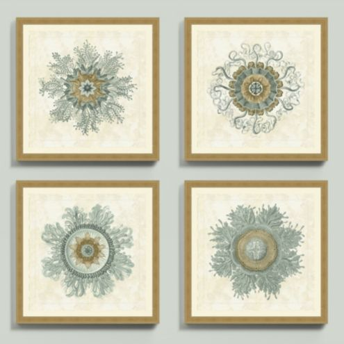 Jellyfish Bloom Framed Prints